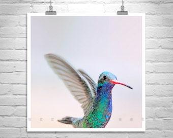 Hummingbird Print, Pastel Photo, Bird in Flight, Bird Print, Hummingbird Photo, Wildlife Art, Nature Photography, Bird Photograph
