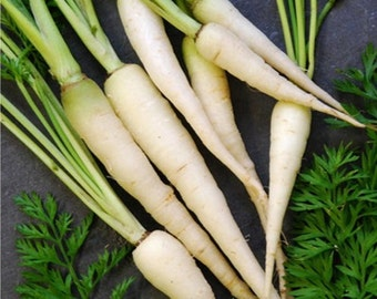 Organic Heirloom Snow White Carrot Vegetable Seeds