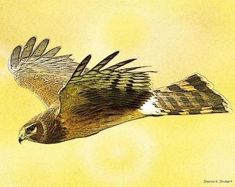 Hawk Art, Flying Bird of Prey, Native American Totem Animal, Southwestern Home Decor, Yellow Decorative, Wall Hanging, Giclee Print, 8 x 10