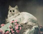 Antique glass eyes cat photo postcard, antique cat photo postcard, novelty photo postcard, glass eyes postcard, cat real eyes postcard