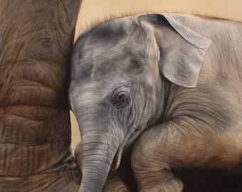 SAM DOLMAN Elephant Animal Limited Edition Print