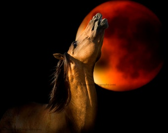 Kiger Mustang Wild Horse Blood Moon