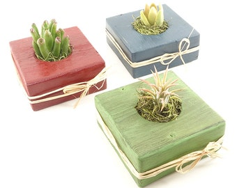 25 Colorful Succulent, Cactus, Haworthia, Air Plant WEDDING EVENT Wood Guest Favors - Baby Shower, Bridal Shower, Birthday