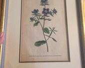 W Curtis botanical engraving 1789 plate No 102