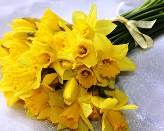 how to grow daffodil bulb