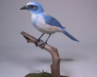 Florida Scrub Jay Wooden Hand carved Bird
