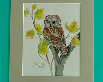SAW WHET OWL Bird, Original Watercolor Painting on Paper by Susana Caban, Bird Art, Nature Study, Home Decor, Owl Art and Design