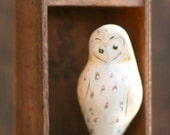 Barn Owl in Shadow Box