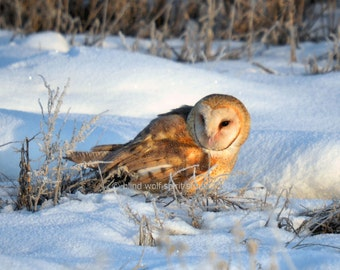 Owl Photography, Bird Photography, Barn Owl, Woodland, Wildlife Photography, Fine Art Photography
