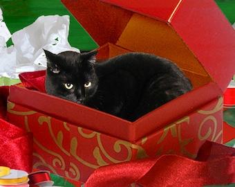 Set of 5 Handmade Christmas Cards, Black Cat in a Box, Holiday Greeting Cards, Xmas Gifts, Deborah Julian