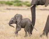 Baby Nursery Art, Safari ...