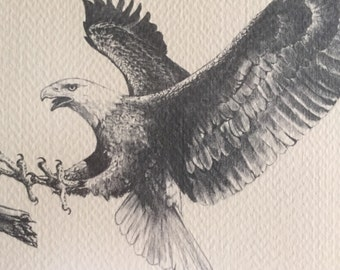 Eagle Print/Black and White Print/Eagle in Flight/Landing Eagle Print Framed By Gatormom13