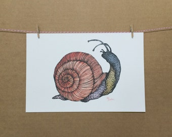 Watercolor/Ink-Animal-Insects-Snail