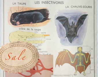 Vintage French School Poster 1950s Dog Bat Mole