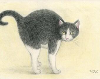 Cat original drawing - P006January2016