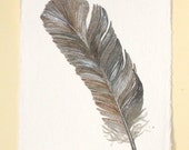 Original watercolour feather painting illustration one of a series