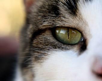 Cat Face Photo, Cat Photograph, Macro Photography, Macro Print, Cat Print, Cat Art, Cats, Cat Close Up, Cat Eye