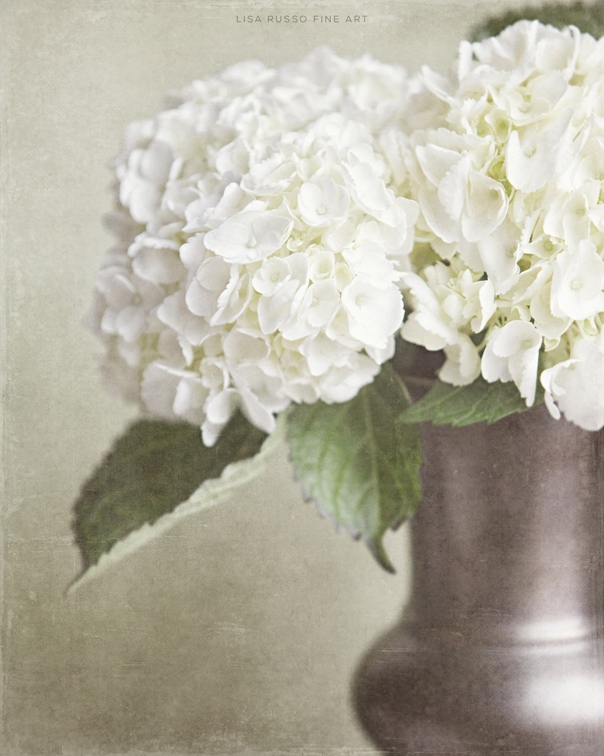 Shabby Chic Print Or Canvas Art Cream Hydrangea Flower Print