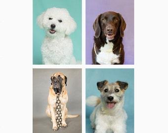 Cute Dog Greeting Card, blank notecard set, blank greeting cards, dog photography, dog print, blank notecard set, dog prints Mix & Match