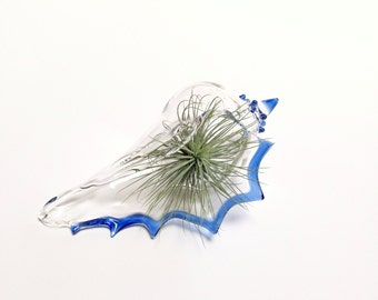 Air Plant Terrarium , Planter , Air Plant Vase , Clear Glass Seashell with Blue