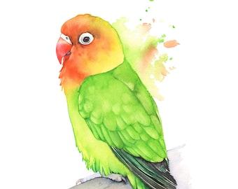 Lovebird Original watercolor painting. Original Lovebird painting, Original bird watercolour painting, Original parrot watercolor painting