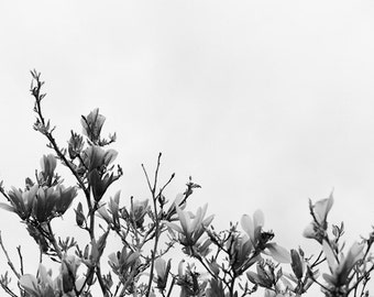 Magnolia Tree Photography, Black and White Botanical Art, Floral Wall Decor, Minimalist Art, Nature Photograph, Magnolia Tree
