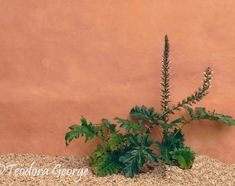 Wall Plant Photography, Still Life Photography
