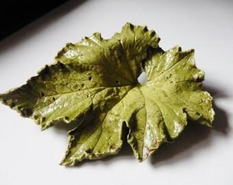 Raspberry Swirl Begonia leaf casting
