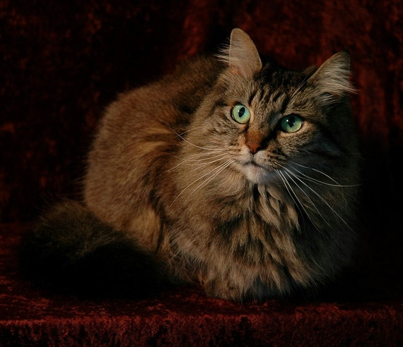 cat photograph home decor wall decor cottage decor cat