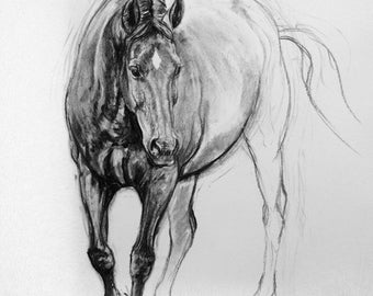 Beautiful equine art horse art LE wall art horse gift art print 'Curious' from an original charcoal home decor horse lover gift