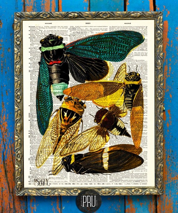 Beautifully Intricate E.A. Séguy Insect Print (Tacua Speciosa) on an Upcycled Unframed Antique Book Page