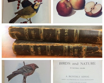 """Antique Nature Books With Color Illustrations """"Birds and Nature In Natural Colors"""" Volume IX 1901 and Volume XI 1902 Monthly Study of Nature"""