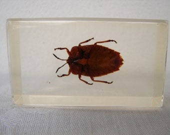 vintage entomology study-Eastern bug,beetle,preserved in acrylic block-Taxidermy beetles,paper weights