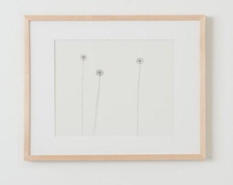Fine Art Print.  Dandelions - Landscape Format, November 11, 2012.
