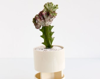 Archromo: Planter + Tray