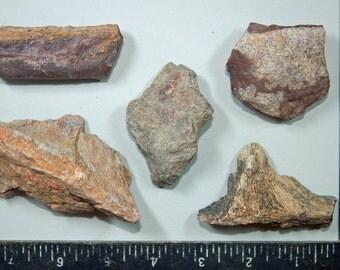 Calcified Dinosaur Bone Shards