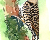 ACEO Limited Edition 2/25-Touch of spot, Art print of an ACEO original watercolor, Gift idea for House warming & Bird lovers, Woodpecker