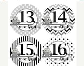 ON SALE Baby Monthly Milestone Growth Stickers 13-24 Months 2nd Year in Black Grey Owls Nursery Theme Baby Shower Gift MS306 Baby Photo Prop