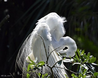 Coy egret! Add unique beauty to your home. Bring the Outside in!