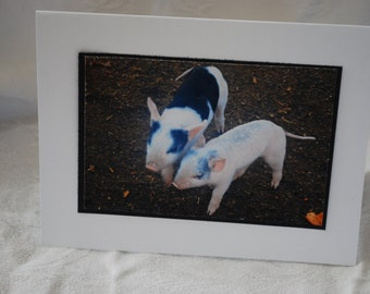 photo card, baby pigs, photography