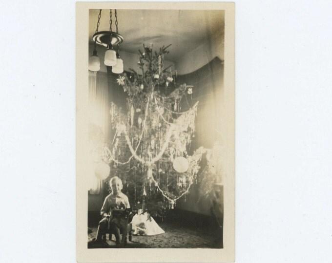 Small Boy, Large Xmas Tree, c1930s Vintage Snapshot Photo (66472)