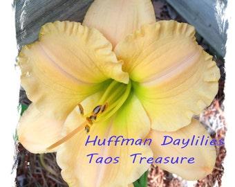 "Daylily, ""Taos Treasure"", double fan, perennial"