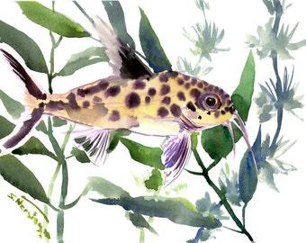 """Synodontis Multipunctatus, aquarium art, original watercolor painting, 12"""" X 9"""", fish lover olive green aquarium fish lover"""