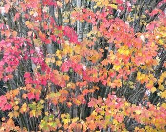 Autumn Leaves 7