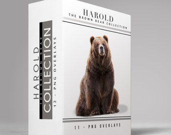 Harold - 11 - Brown Bear Transparent PNG Images