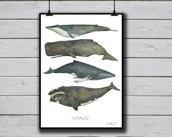 POSTER PRINT - Whales - Blue Sperm Humpback & Right Whale species - whale nursery Ocean watercolor Poster - nautical decor -by Juan Bosco