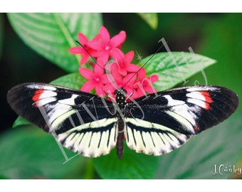 Spread My Wings - Butterfly Photograph
