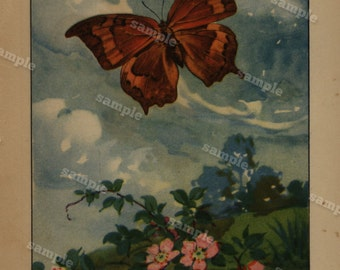 1917 Antique Natural History Entomological & Botanical  Butterfly Print – Goatweed Emperor double sided