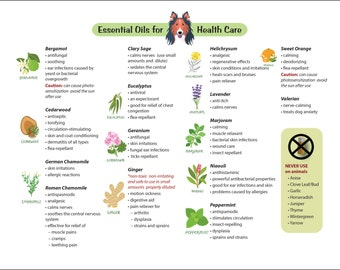 15 Essential Oils for Dogs Chart Guide Common Ailments Canine Health Care Healing Herbs Aromatherapy Alternative Holistic Eastern Medicine