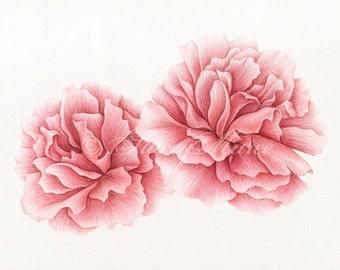 Pink Peonies - Illustration - Fine Art Print